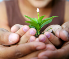 A childs hands hold soil with a plant growing from it. adults hands cradle childs hands